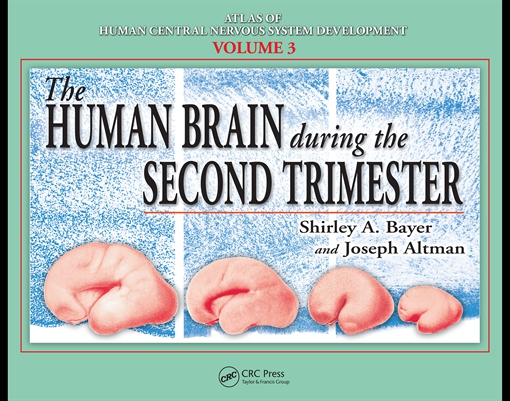The Human Brain During the Second Trimester