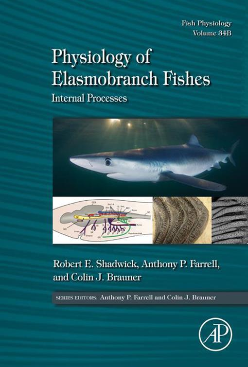 Physiology of Elasmobranch Fishes: Internal Processes